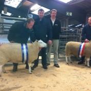Champions Ewe & Reserve Champion Ewe